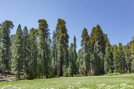 finde: Im Sequoia National Park in der Giant Village Area.   Die Giant Village Area liegt an der SR-198 und umfaßt eine der größten Ansammlungen von Sequoia Trees im Park. Sie ist die touristisch am besten und am meisten erschlossene Gegend des Parks. Hier finde