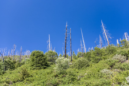 old forest fire in yosemite national park under blue sky