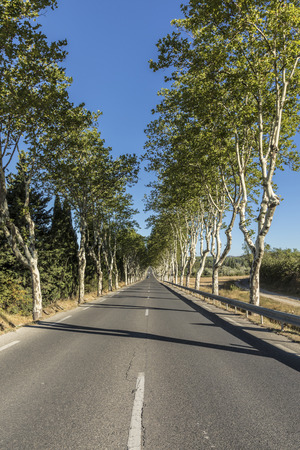 typical french alley with green sycamore trees Stock Photo