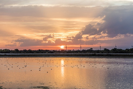 sunset in the camargue with industry at horizon and birds