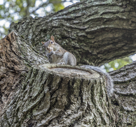 shy squirrel at the tree tries to hide