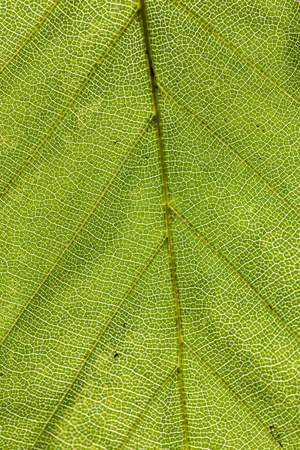 detail of leaf gives a harmonic green background Stock Photo