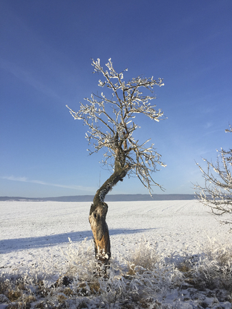 trees covered with snow and ice in winter landscape under blue sky