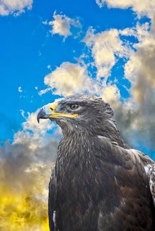 detail of trustful looking falcon
