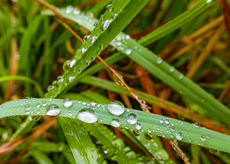 detail of water drops on reed grass