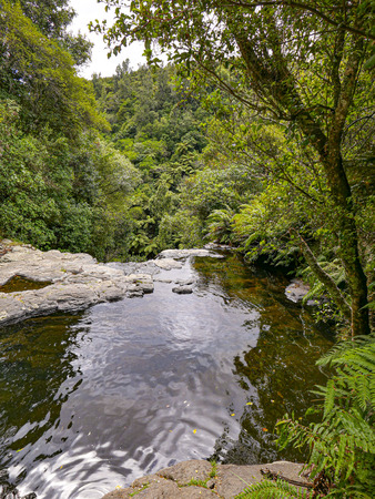 scenic Kaituna River, Rotorua  in the tropical forest in New Zealand, south islands