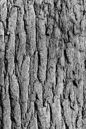 detail of oak bark in autumn Stock Photo