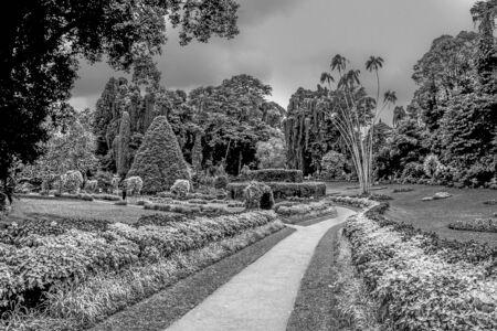 botanical Garden of Peradeniya, Kandi under dark raining season clouds Stockfoto - 128606146