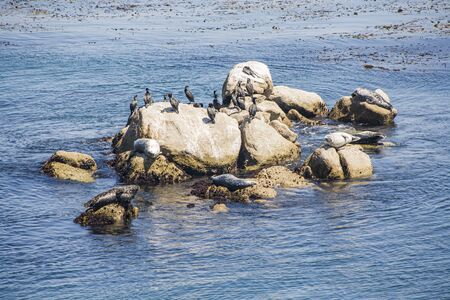 seals enjoy the warm weather at the rochk in Monterey, USA Stock Photo
