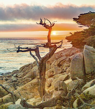 romantic sunrise near Point Lobos with old dried trees at the stone beach and a cypress Stock Photo