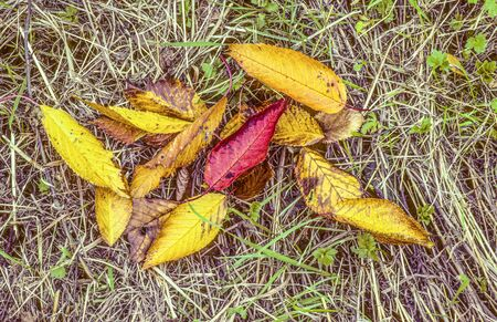leaves in colorful autumn indian summer mood at the meadow