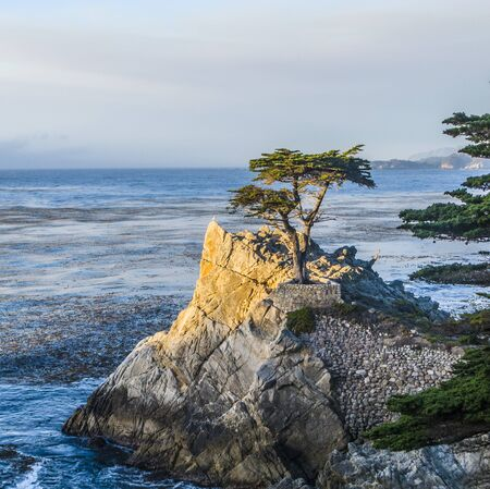 Monterey, USA - July 26, 2008: Lone Cypress tree view along famous 17 Mile Drive in Monterey. Sources claim it is one of the most photographed trees in North America.