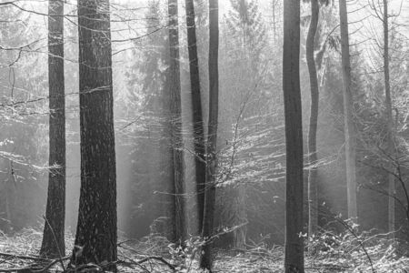 spectacular shadow with fog in the Taunus forest near Glashuetten at the Feldberg area Banco de Imagens