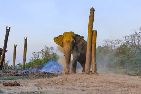 asian elephant in the breeding center at chitwan national park in Nepal