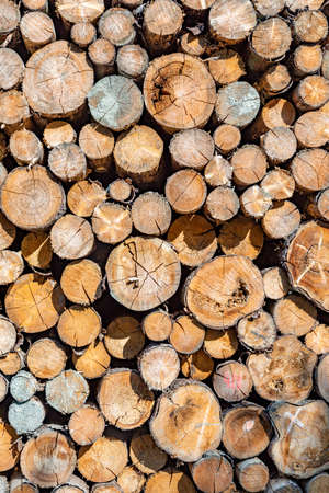 stapled woodpile in the German forest as harmonic background Stock Photo