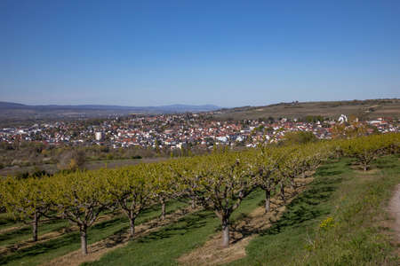 skyline of Ingelheim with famous church and castle in Germany