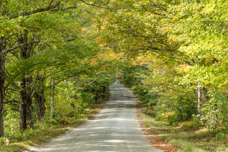 road in the green forest near Newfane, USA