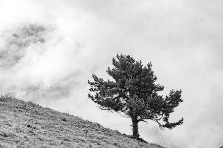 fir tree at a steep mountain meadow in the european Alps, Europe Фото со стока