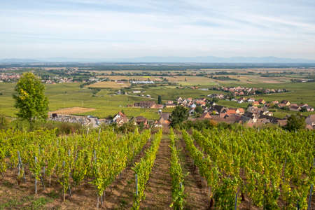 scenic landscape with vineyard in the Alsace region with small village