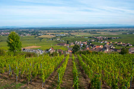scenic view to Gueberschwihr and vineyards in the Alsace region, France