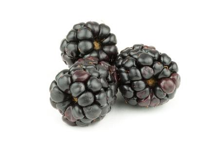 Three blackberries on white