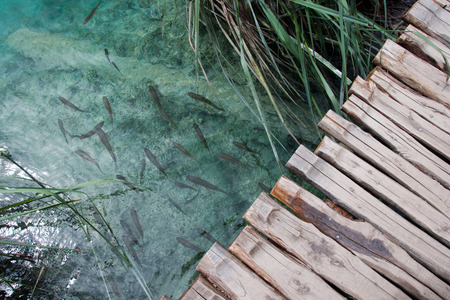 Wooden path and clear water with fish, Plitvice Lakes National Park, Croatia