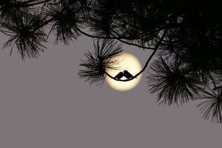 Love at moonlight photo