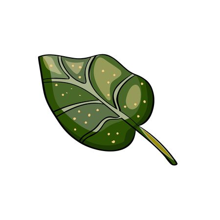 Lily leaf. Botanical Cartoon style. Vector illustration of lotus flowers the culture of China, Japan, India. East style.
