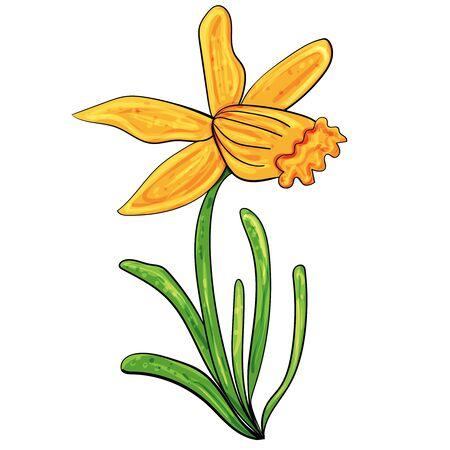 Narcissus. Easter illustration. Vector clip art illustration. Illustration of nature, plant elements, flowering.