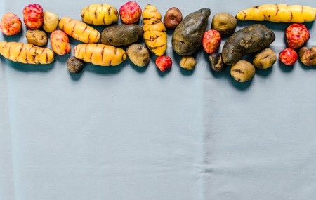 Colorful Bolivian and Peruvian potatoes and tubers against colored background