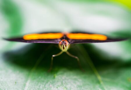 Close up macro photography of a colorful butterfly sitting on a green leaf.