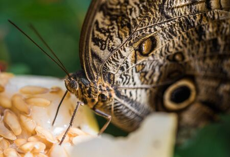 Close up macro photography of a colorful butterfly. 版權商用圖片