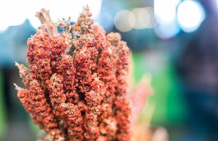 Plant of quinoa seed grain on display at a street food market fair festival.
