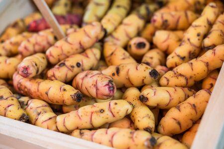 Organic New Zealand yams or oca vegetables at a street food market. Stock Photo