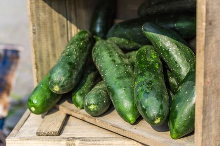 Organic cucumbers vegetables on display in wooden boxes.