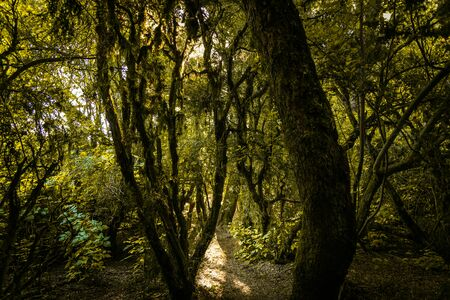 Scenic landscape photo of wonderland magic forest with green trees Banque d'images