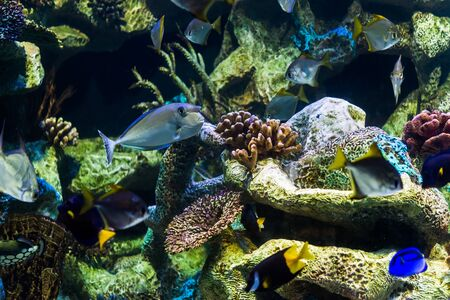 Close up photo of exotic colorful fish in sea and ocean world
