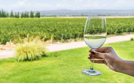 A young woman holding a glass of white wine against the background of vineyard.