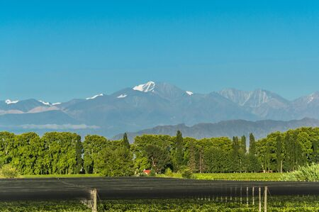 Vineyards in Mendoza at the background of Andes mountains.