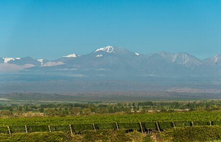 Vineyards in Mendoza at the background of Andes mountains