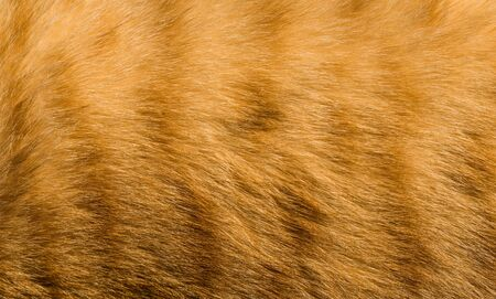 Abstract background with feline orange cat tiger fur pattern and texture 免版税图像