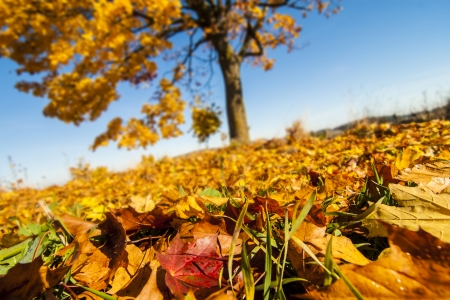 Autumn Scene With Colorful Leaves, Tree and Blue Sky  Stock Photo - 23338355