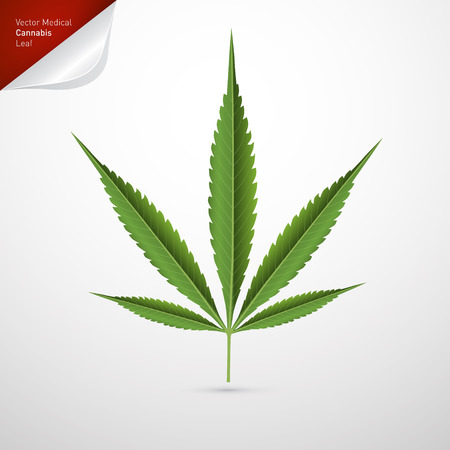 marijuana leaf: Medical Cannabis Leaf Isolated on White