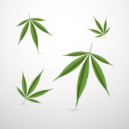marihuana: Vector Medical Cannabis Leaves Isolated on White Background