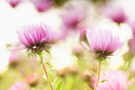 Pink Flowers Abstract Background photo