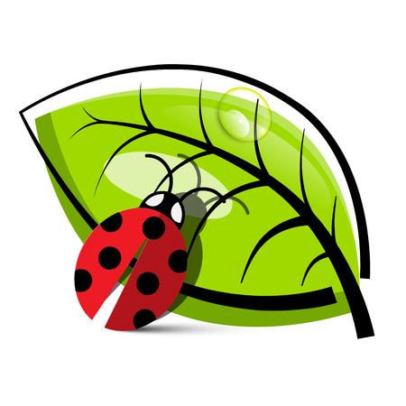 ladybug on leaf: Ladybug Illustration with Leaf Isolated on White Background