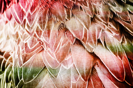 bird feathers: Abstract Background - Pink and Green Bird Feathers Stock Photo