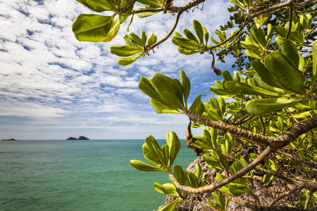 green plants: Ocean With Blue Sky and Green Plants