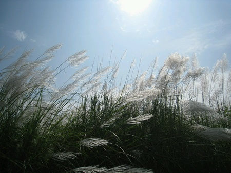 viento soplando: Soplado viento