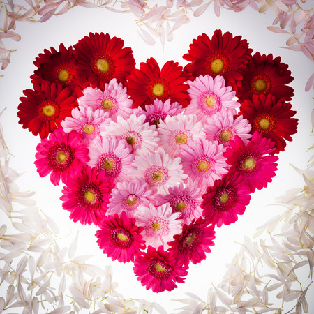 Gerbera heart with petals around Stock Photo - 28392071